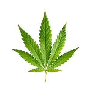 MarijuanaLeaf